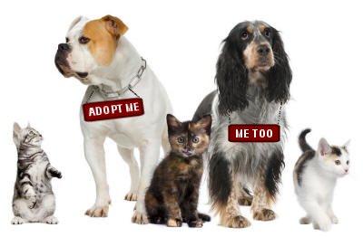 dogs adoption